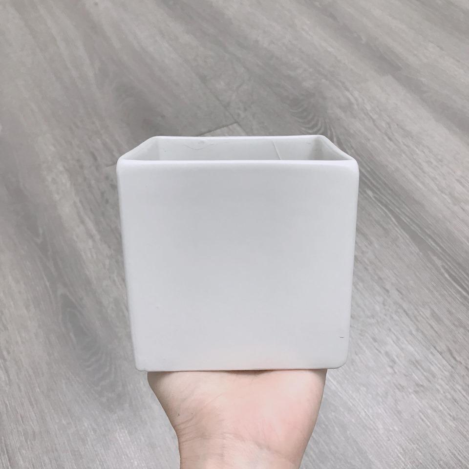 Chậu vuông trắng 10*10cm